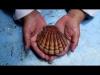 Embedded thumbnail for Almeja de laboratorio (UABC NO SE DETIENE) - IMAGO