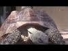 Embedded thumbnail for Investigan la salmonella y su relación con las especies invasoras