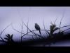 Embedded thumbnail for Cartografías de imagen y sonido (UABC NO SE DETIENE) - IMAGO