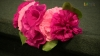 Embedded thumbnail for Promueven sensibilización contra el cáncer de mama