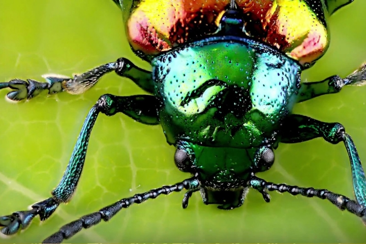 Embedded thumbnail for 413 Coleoptera and Compost -  Vitamin C