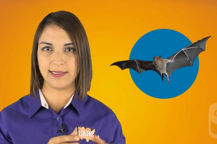 Embedded thumbnail for Bats - Vitamin C