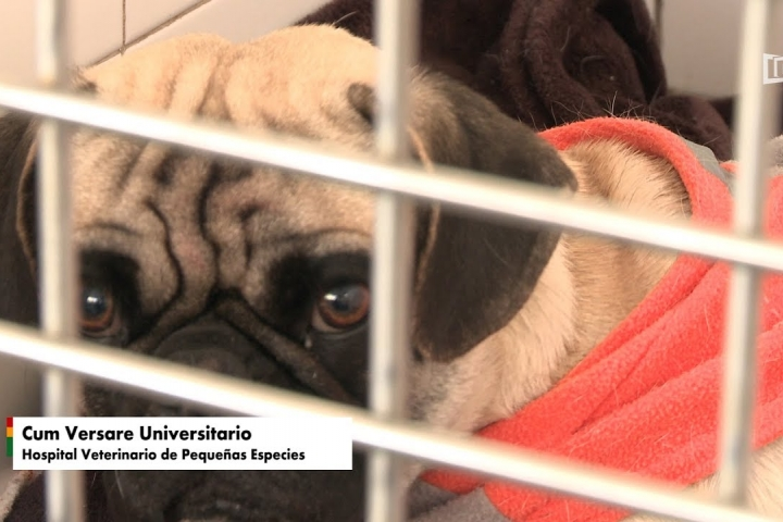 "Embedded thumbnail for ""Cum Versare Universitario"" Hospital Veterinario de Pequeñas Especies"