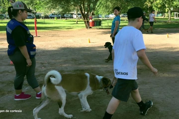 Embedded thumbnail for Segundo Curso de la Importancia de la Actividad Física con Animales de Compañía