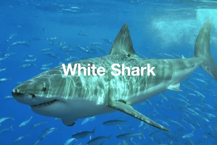 Embedded thumbnail for Shark Soup - Vitamin C