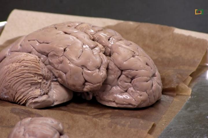 Embedded thumbnail for Estudian funciones del sistema nervioso