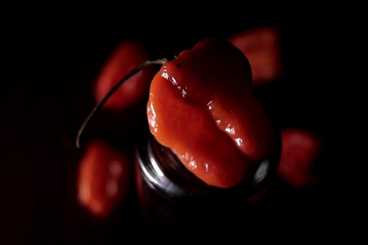 Embedded thumbnail for Proyecto Chile Habanero - IMAGO