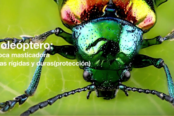 Embedded thumbnail for 13 Coleopteros y composta -  Vitamina C